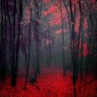 """Image found on """"Dark Woods"""" Facebook page."""