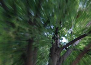 9 1 2014 cicada tale 3 - edgar's hair - cicada heaven