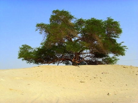 Hamish Gunn.  Tree of Life, Bahrain.  Shared with CDHK.