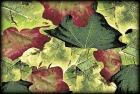 crazy leaves