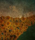 sunflower highway 2