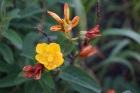 7 28 2014 yellow & spent flowers 3