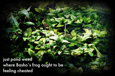 8 6 2014 creek pond seaweed 1 haiga