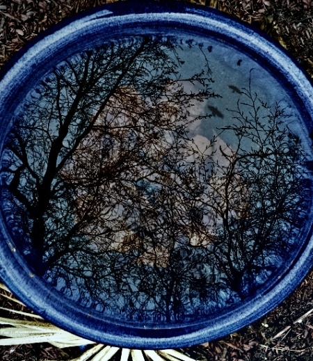 12 3 2014 bird bath leaves birch tree reflection 4c with birds