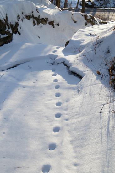 caledonia creek waterfall snow footprints