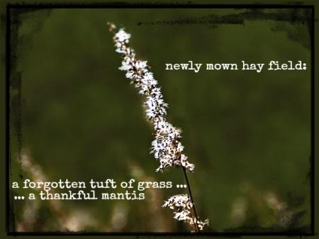 newly mown hay field haiga