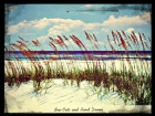 sea oats and sand dunes ocean 2