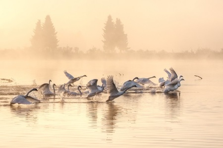 Waterbaby.  Departing Geese.