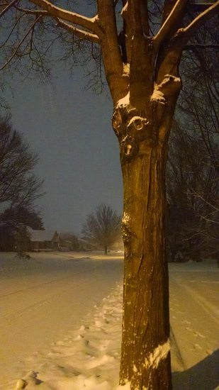 1 26 2015 snow tree edgar ent with snow streak