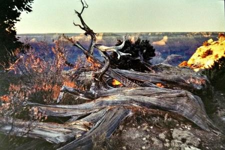 1999 Grand Canyon Sunset 1 original