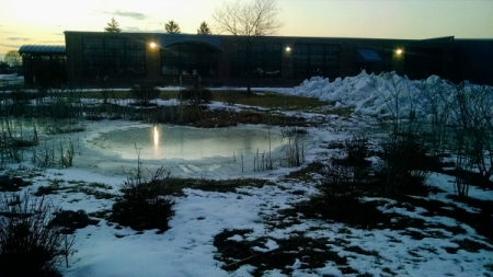 3 7 2015 frozen swamp reflections ice 5a