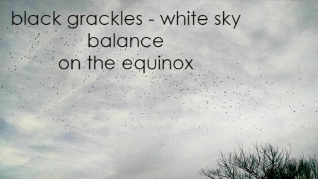 black grackles white sky