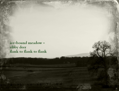 ice-bound meadow haiga