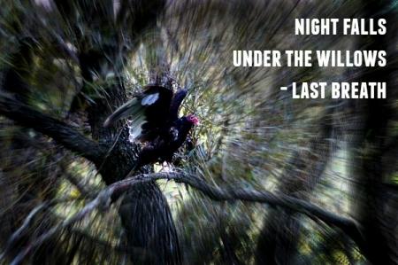 night falls haiga