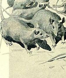 Detail, Famille Raton, Jules Verne.