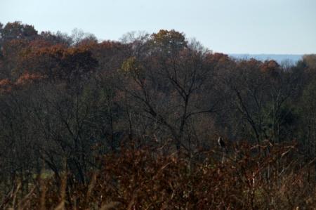 11 10 2014 lone bird in woods gettysburg 0