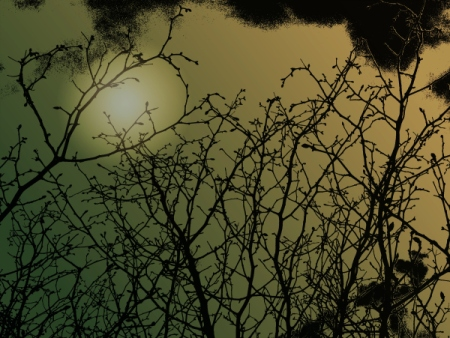 4 3 2015 sky silhouette branches 2