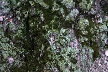 4 9 2015 edgar lichen