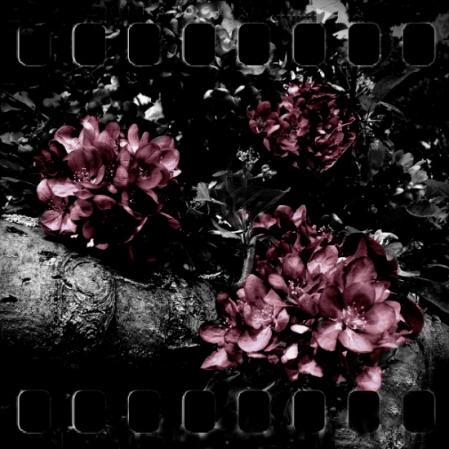 blossoms colorized