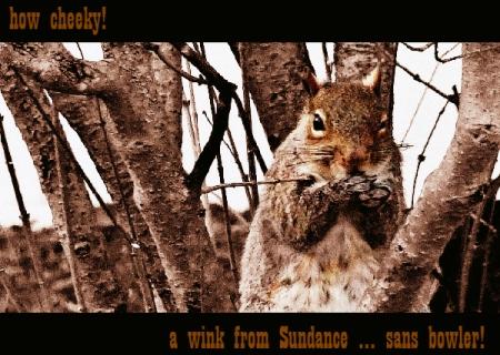 letterbox squirrel