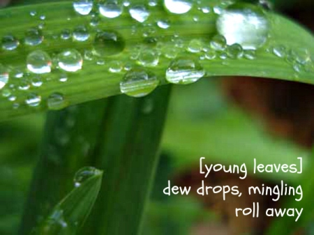 young leaves haiga
