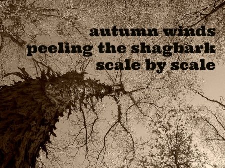 autumn winds haiga